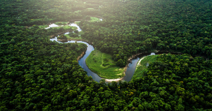 A Guide to Visiting the Amazon Rainforest